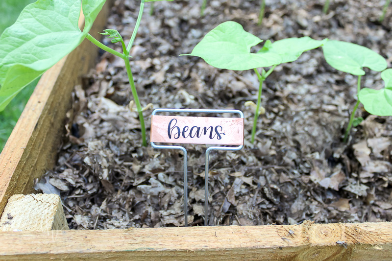 Garden Beans, hand lettered label